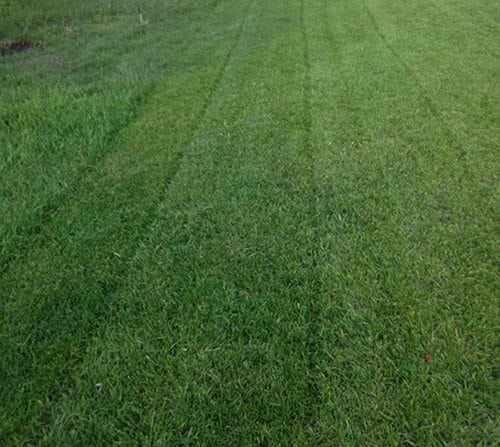 How do I prevent weeds in my yard